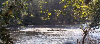 Ellijay River